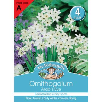 Mr Fothergill's Bulbs Ornithogalum Arabicum Eyes