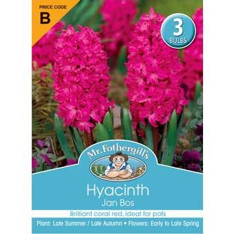 Mr Fothergill's Bulbs Hyacinth Jan Bos