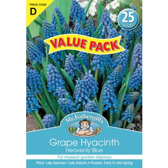 Mr Fothergill's Bulbs Grape Hyacinth Heavenly Blue