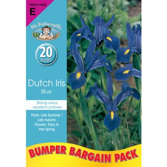 Mr Fothergill's Bulbs Dutch Iris Blue