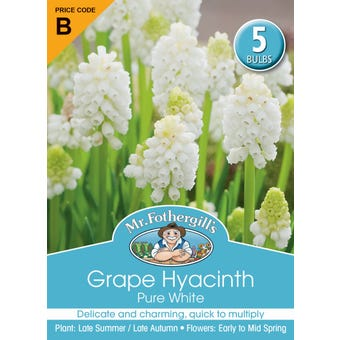 Mr Fothergill's Bulbs Grape Hyacinth White