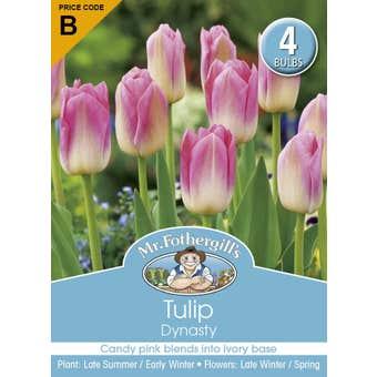 Mr Fothergill's Bulbs Tulip Dynasty 4 Bulbs