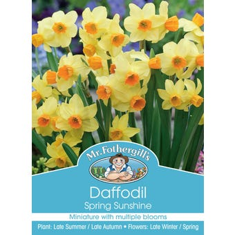 Mr Fothergill's Bulbs Daffodil Spring Sunshine 3 Bulbs