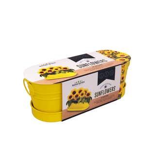 Grow Your Own Sunflower Windowsill Tin
