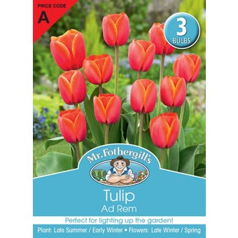 Mr Fothergill's Bulbs Tulip Adrem 3 Bulbs