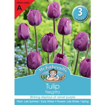 Mr Fothergill's Bulbs Tulip Negrita 3 Bulbs