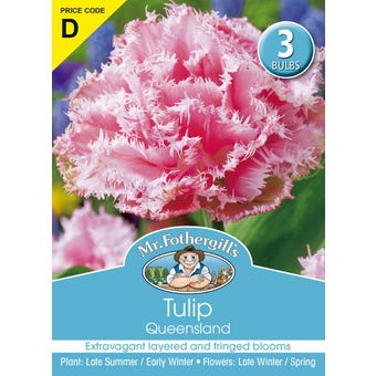Mr Fothergill's Bulbs Tulip Queensland 3 Bulbs