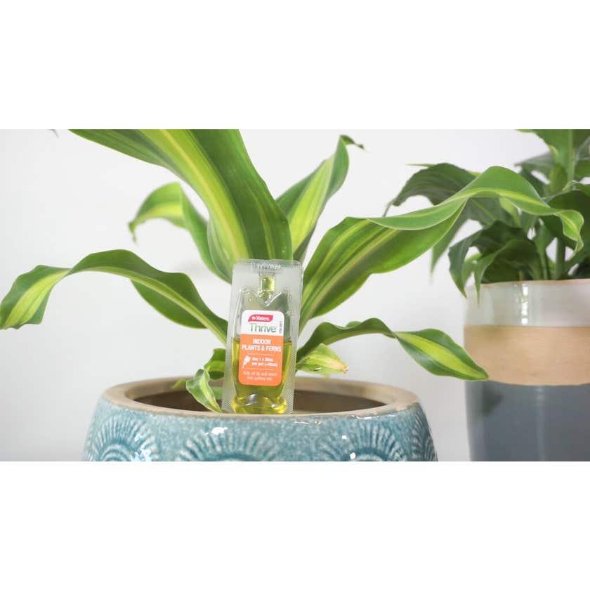 Yates Thrive Indoor Plants & Ferns Food Dripper - 3 Pack