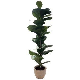 Botanic Lifestyles Artificial Fiddle Leaf Tree 95cm